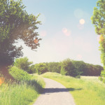 Nature trail in a summer landscape with sunshine