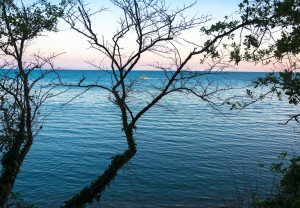 View of the calm sea through the branches of trees without leaves.