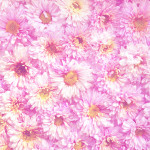 Pink flowers pattern for background